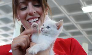 Purina Acquires Leading Pet Adoption Website