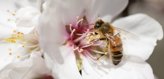 Haagen-Dazs Celebrates 10th Anniversary of Honey Bee Support